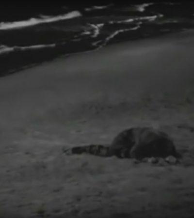 Zampano na plaži