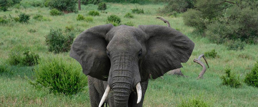 Foto-uspomene iz Tanzanije