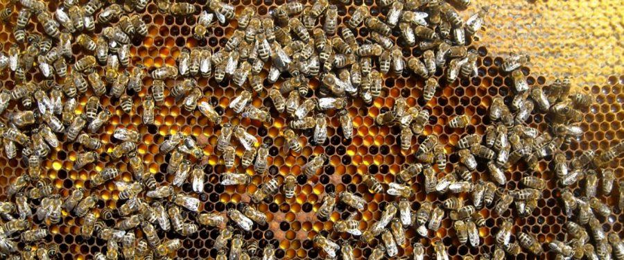 Pčelarstvo je profesija satkana od ljubavi, rada i slobode