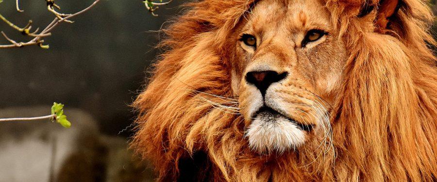 Car životinja
