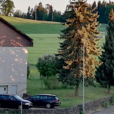 Štelovanje glave: priče iz života jedne pančevačke porodice u (ne tako) dalekom svetu