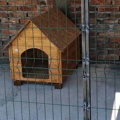 Rešenje problema pasa lutalica u Opštini Kovačica: Podrška prihvatilištu u Idvoru?