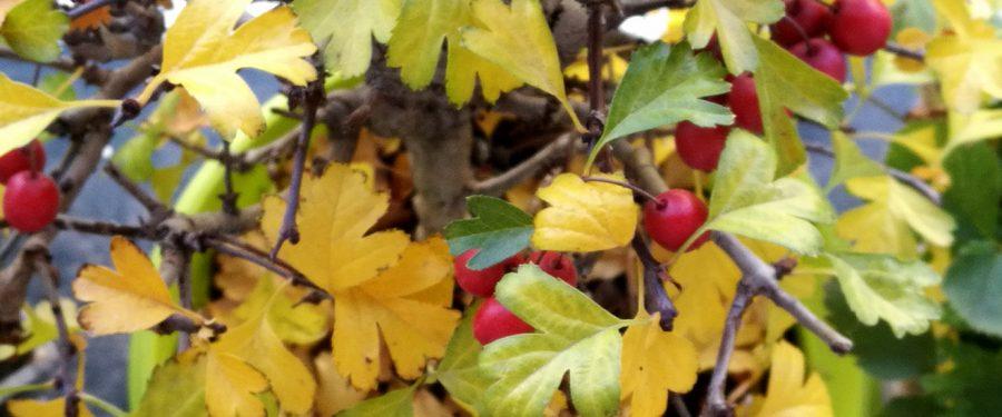 Zloslutna jesen u mom kraju