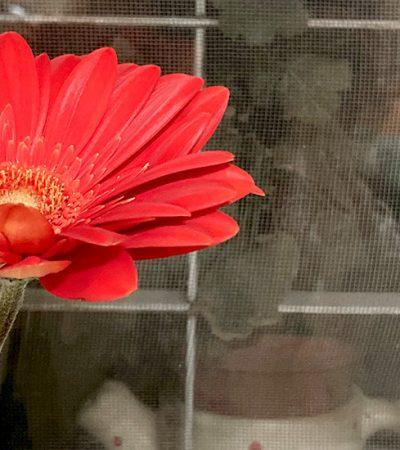 Jedan cvet i sve ostalo